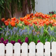 Choosing annuals and perennials for your garden