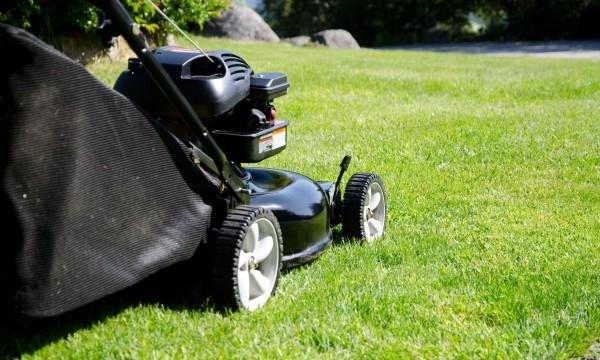 Common lawn problems
