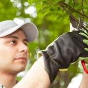 7 tricks to care for young trees that will help them grow