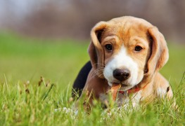 Smart tricks for walking your dog