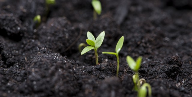 6 ways you can grow your own health food store