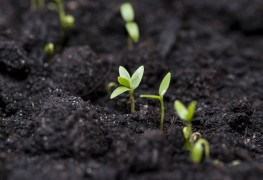 A few tips for working with alkaline soil