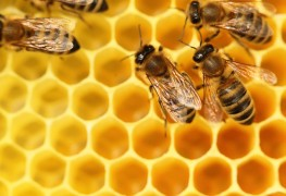 Find the optimal location for a standard beehive