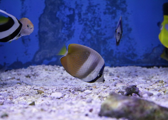 Pet and aquarium supplies; small animals, birds; pond, marine, rare and exotic fish; reptiles; animal food