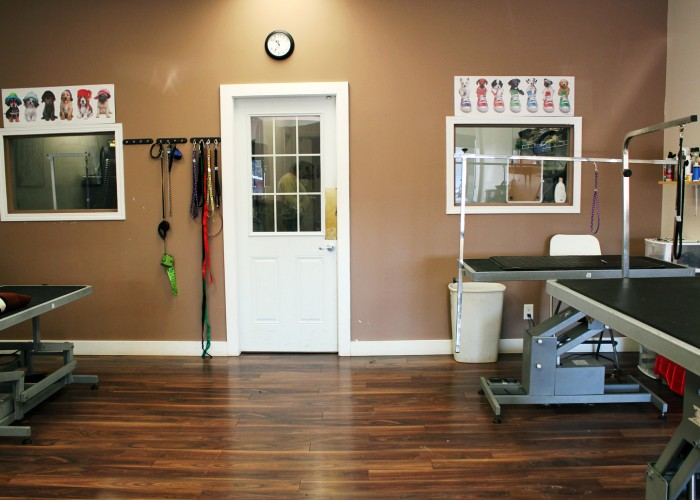 Dazzling dogs grooming edmonton business story for Dog grooming salon floor plans