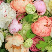 A few tips for caring for peonies