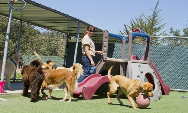 6 smart options for boarding your pet