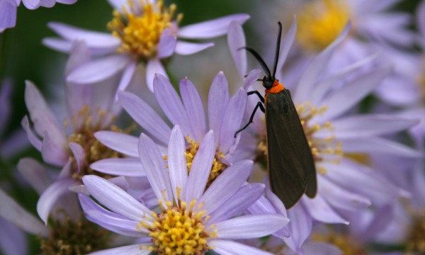 Rid your garden of insects with these homemade traps