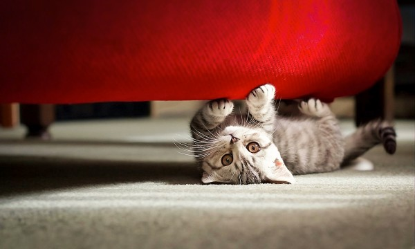 How to prevent your cat's teeth from becoming infected