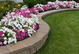 How to plant annuals in the edges of your flower beds