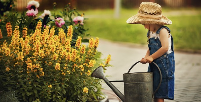 10 pointers every gardening novice should know