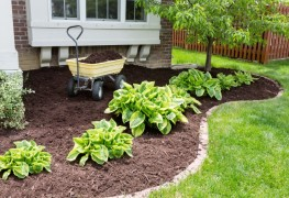 A guide to using mulch in your garden