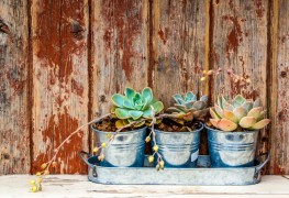A few tips for maintaining container gardens when Winter comes