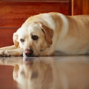 3 reasons your dog may be limping on a hind leg