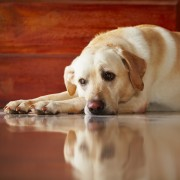Home remedies for 4 common pet health issues