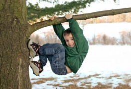 Tips on climbing a tree and constructing a paper kite