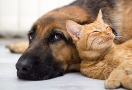 5 things you need to know about pet insurance
