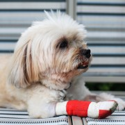 Identify your dog's injuries and treat limping