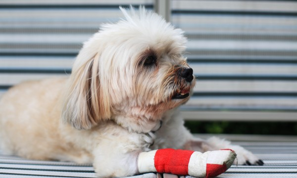Is your dog limping? A cracked or torn nail could be the culprit ...