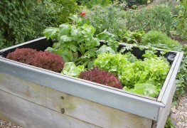 How to build raised garden beds in 5 easy steps