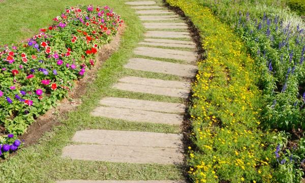 Green gardening: growing gladioli