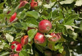 How to grow fruit organically