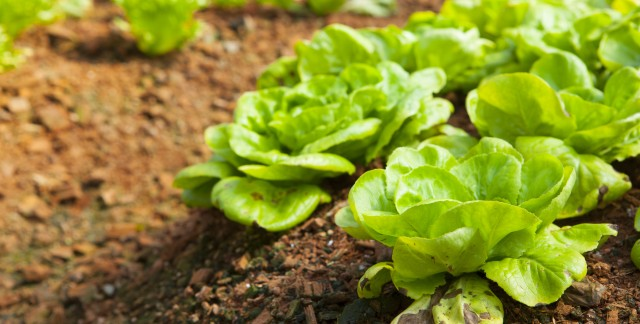 Pest control advice to protect your organic garden