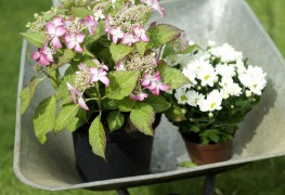 Planting in containers in cold climates