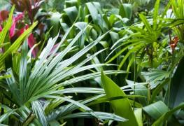25 easy ideas for shade gardens