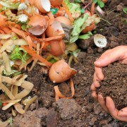 Do's and dont's of composting