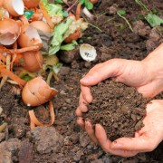 6 reasons you should start composting