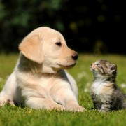 How potential pet owners are saving time and money