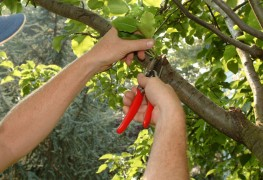 How to prune your plants and trees