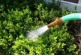 3 easy ways to save water around the garden
