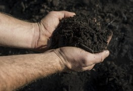 Composting 101: a few helpful hints