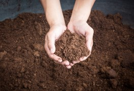 5 tips for topdressing compost