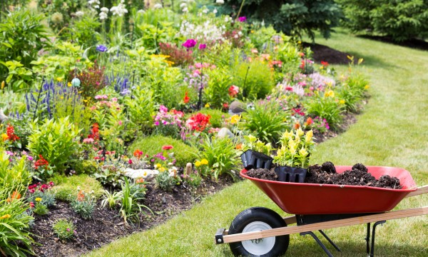Use manure and green manuring for garden health