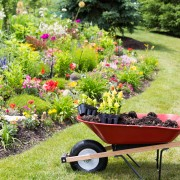 3 things to consider when planning your garden