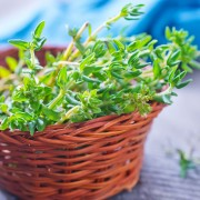 Useful tips for growing thyme in your garden
