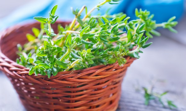 Useful tipsfor growing thyme in your garden
