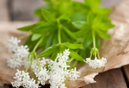 4 expert tips for growing healthy woodruff