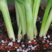 3 key tips for fertilizing your garden with potassium