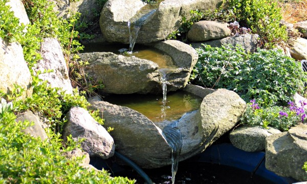 How to choose plants that thrive next to your garden pond