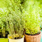 5 tips for choosing healthy plants at a discount