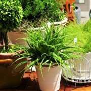 5 helpful hints for healthy houseplants
