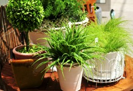 5 helpful hints for healthy houseplants