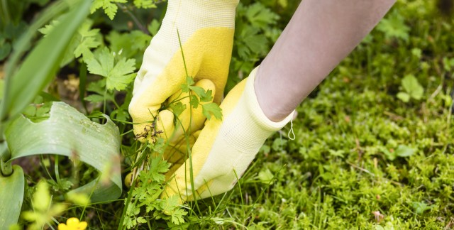 Keeping weeds out of your lawn