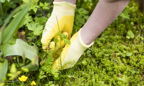 3 ways to effectively prevent and remove weeds in your garden