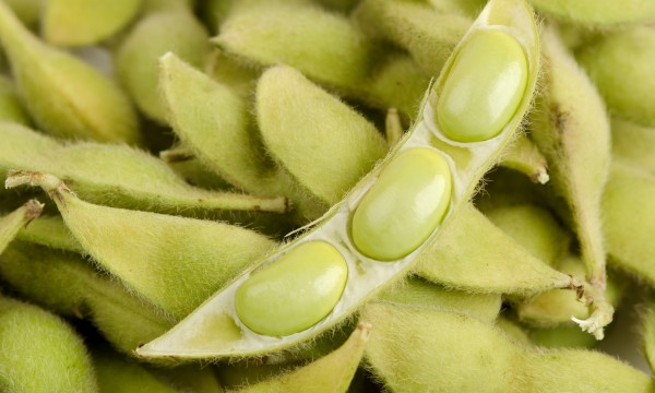 The benefits of eating soy
