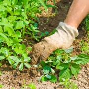 How to control weeds, use mulch and get rid of slugs and snails
